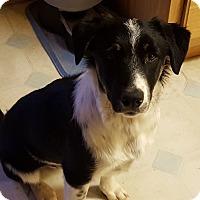 Adopt A Pet :: Kobi - Denver, CO