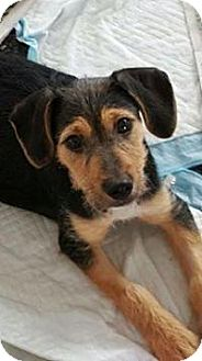 Terrier (Unknown Type, Small) Mix Dog for adoption in Walker, Louisiana - Jinx