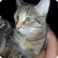 Adopt A Pet :: *PK (& see Fluffy) - Mobile, AL