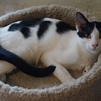 Adopt A Pet :: Nova - Rosemead, CA