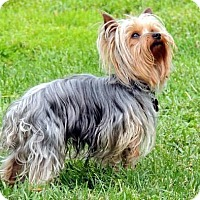 Adopt A Pet :: Brodie - Crump, TN