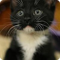 Adopt A Pet :: Azula - Aiken, SC