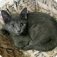 Adopt A Pet :: Lexie - Monroe, NC
