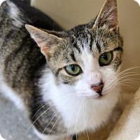 Adopt A Pet :: Katie - Michigan City, IN