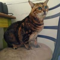 Adopt A Pet :: Alexis - Oak Park, IL