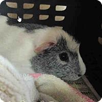 Adopt A Pet :: *Urgent* Jet - Fullerton, CA