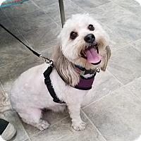 Adopt A Pet :: Freddy - Canoga Park, CA