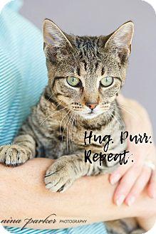 Domestic Shorthair Kitten for adoption in Marietta, Georgia - Razby