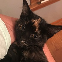 Adopt A Pet :: Zola - Jerseyville, IL