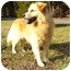 Photo 3 - Golden Retriever/Chow Chow Mix Dog for adoption in Mocksville, North Carolina - Casey