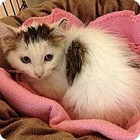 Adopt A Pet :: Lisa Marie - Byron Center, MI