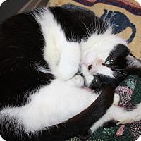 Adopt A Pet :: Martin - Orillia, ON
