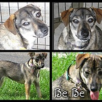 Adopt A Pet :: BeBe - Crowley, LA