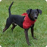 Adopt A Pet :: Lance - Mocksville, NC