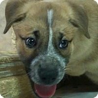 Adopt A Pet :: Charity - House Springs, MO