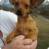 Adopt A Pet :: Penny - Hagerstown, MD