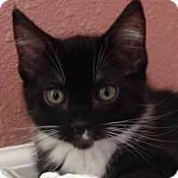 Adopt A Pet :: Cindy - Walnut Creek, CA