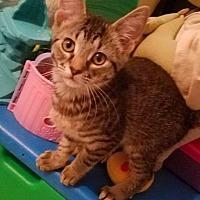 Adopt A Pet :: Anastasia - LaGrange Park, IL