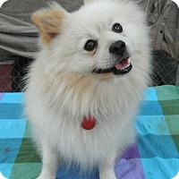 Adopt A Pet :: Cisco - Pittsburgh, PA