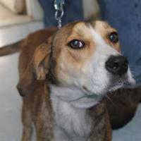 Adopt A Pet :: Autumn - Robinson, IL
