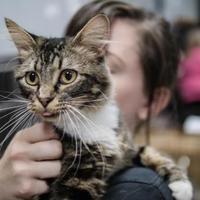 Adopt A Pet :: America - Wichita, KS