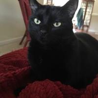 Adopt A Pet :: ROS - McDonough, GA