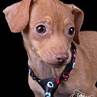 Adopt A Pet :: Nemo - Lodi, CA