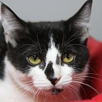 Adopt A Pet :: Gisele - Sarasota, FL