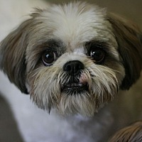 Adopt A Pet :: Panda - Canoga Park, CA
