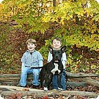 Adopt A Pet :: Roxy - Clarksburg, MD