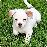 Adopt A Pet :: Jake - La Habra Heights, CA