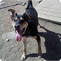 Adopt A Pet :: Mikey - Raymond, NH