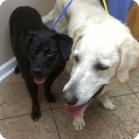 Adopt A Pet :: Sonny and Shadow - Free - White River Junction, VT