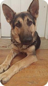 German Shepherd Dog Dog for adoption in Sacramento, California - Vespa
