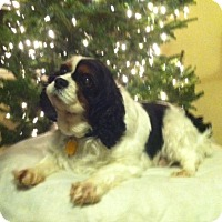 Adopt A Pet :: Alyce - Mt Gretna, PA