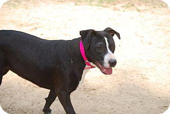 Pit Bull Terrier Mix Dog for adoption in Ruston, Louisiana - Naomi
