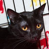Adopt A Pet :: Dolly B - Sacramento, CA