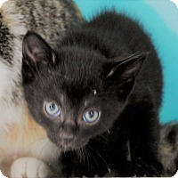Adopt A Pet :: curry - Muskegon, MI