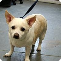 Adopt A Pet :: Jazzie - Aurora, IL