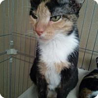 Adopt A Pet :: NIKKI - Hudson, FL