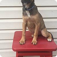 Adopt A Pet :: Phoebe - New Oxford, PA