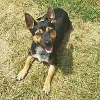 Adopt A Pet :: Chicco - Moberly, MO