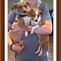 Adopt A Pet :: Hurricane Harvey Matty/Chloe - Tulsa, OK