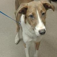 Adopt A Pet :: Ruyard -chipped - Decatur, GA