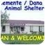 Photo 3 - Domestic Shorthair Kitten for adoption in San Clemente, California - DANDEE