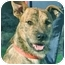 Photo 1 - Terrier (Unknown Type, Medium) Mix Dog for adoption in Mt. Prospect, Illinois - Russell