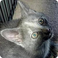 Adopt A Pet :: NaVi - Dallas, TX