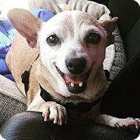 Adopt A Pet :: Pancha Cha Cha - Vista, CA