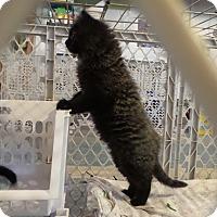 Adopt A Pet :: Janessa - Geneseo, IL