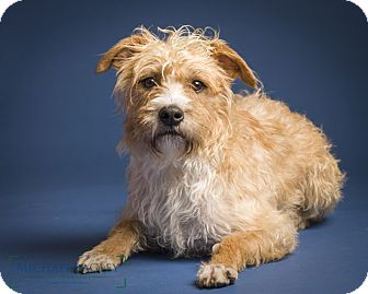 Terrier (Unknown Type, Medium) Mix Dog for adoption in Norwalk, Connecticut - Harris - MEET ME!!